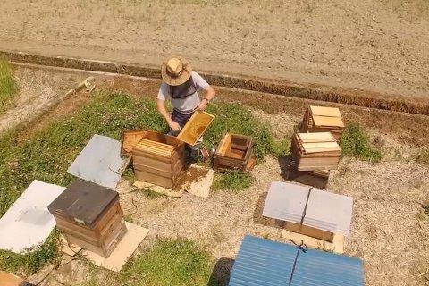 天狗屋養蜂店 採蜜風景
