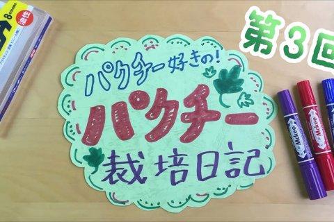 パクチー好きの!パクチー栽培日記 vol.3