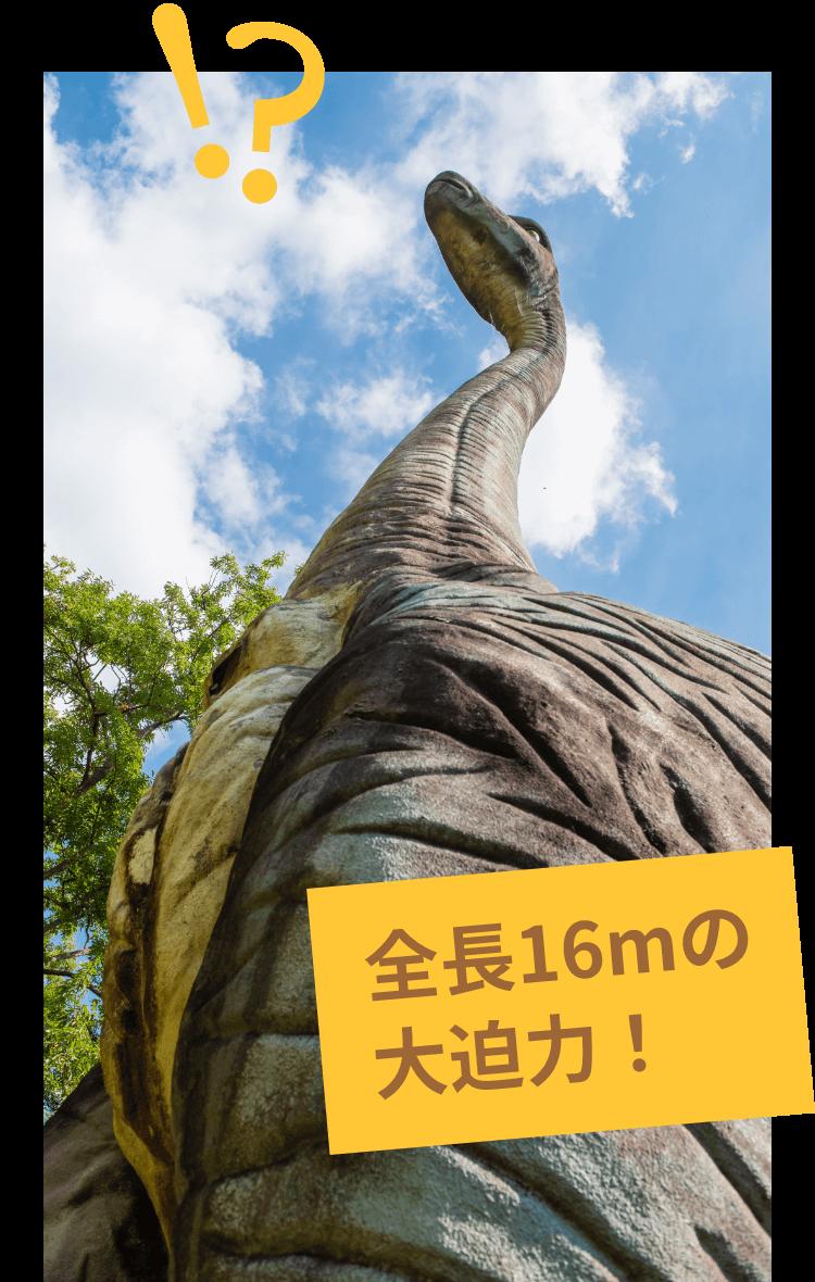 全長16mで大迫力のブラキオサウルス